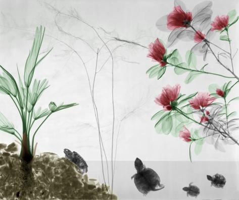 Turtles, wagnerianus, azalea